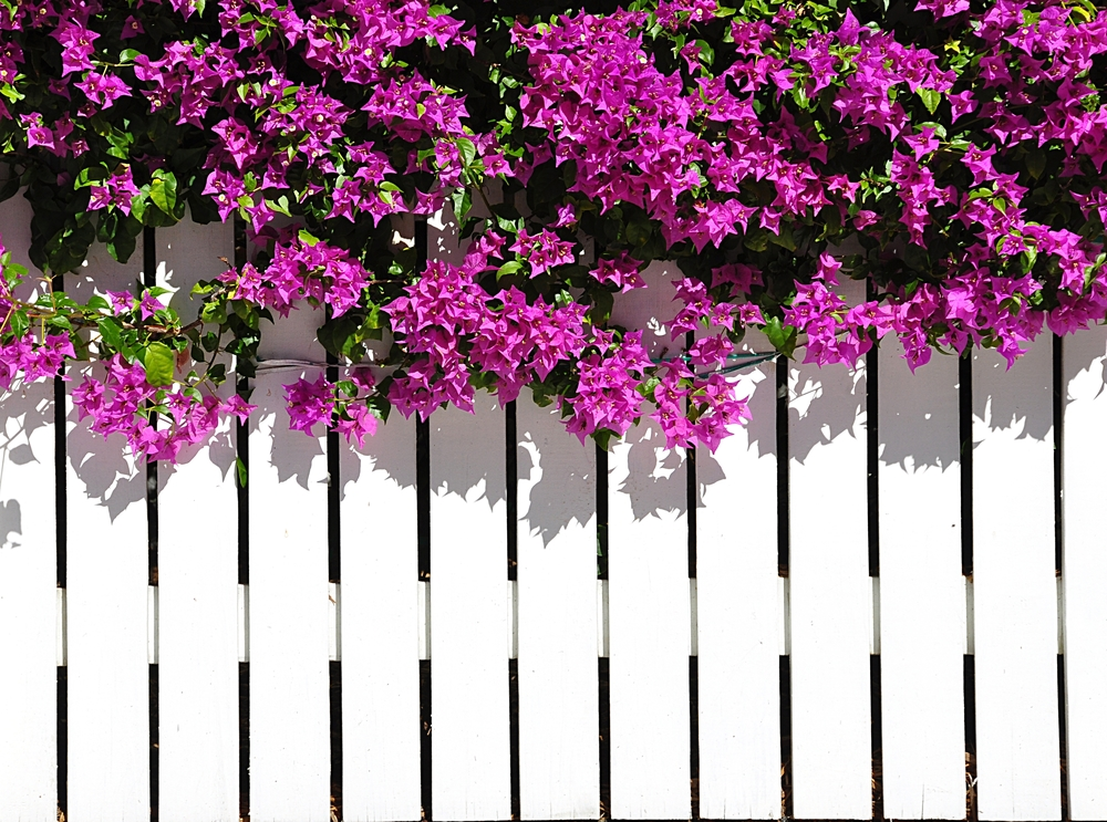options personalizing accessorizing fence