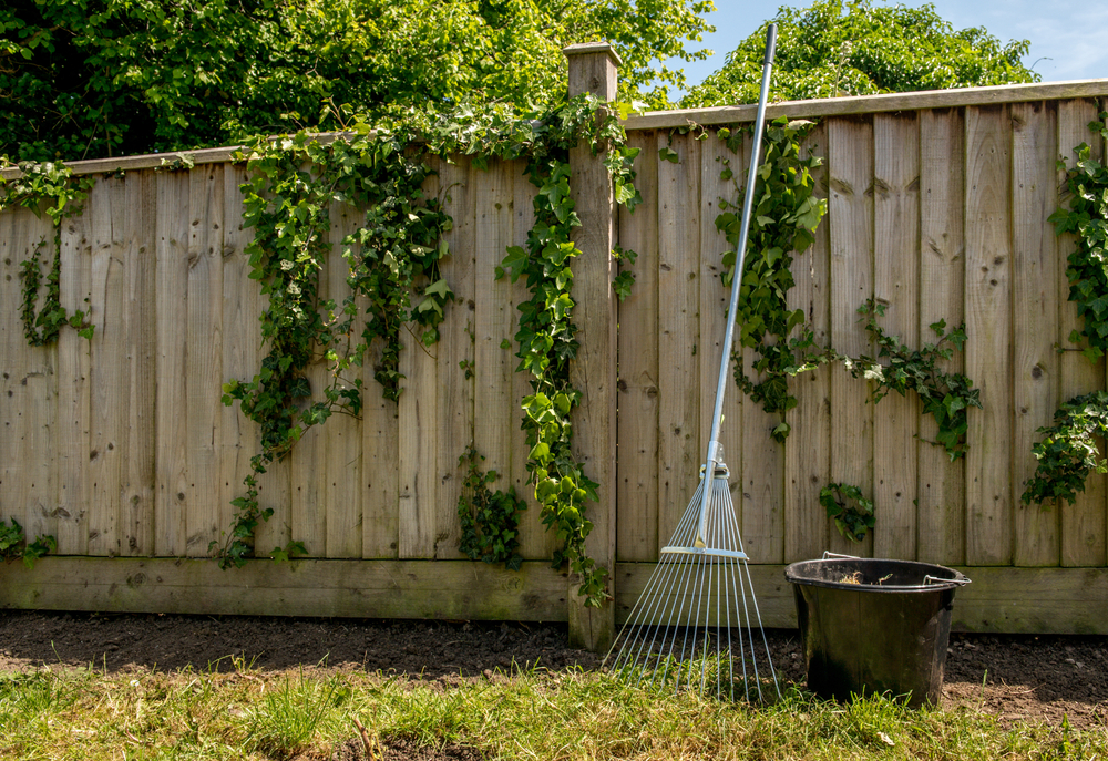 removing ivy fines fences